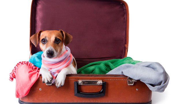 سفر با حیوان خانگی با هواپیما